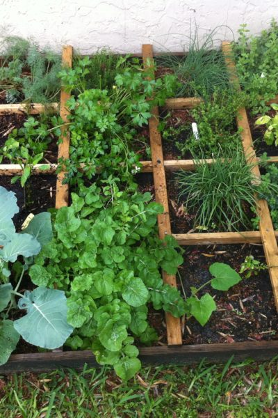 Redhead, Green Thumb ~ My beautiful garden!