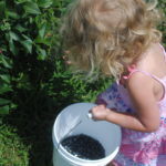 Blueberry Pickin', Blueberry Scones, & Blueberry Pancakes
