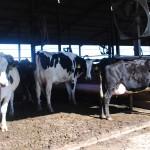 Trip to Dakin Dairy Farm in Florida