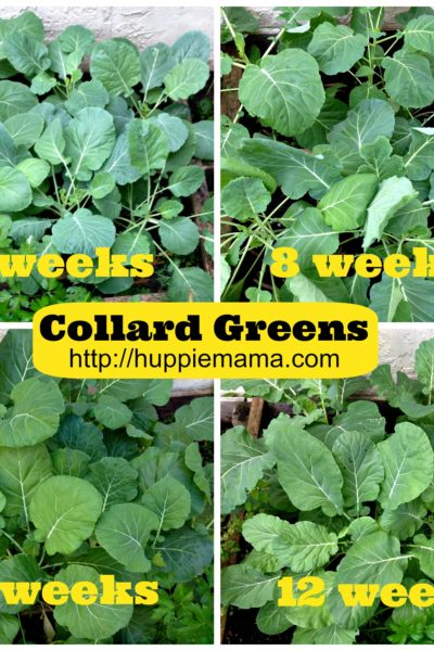 Collard Greens: From Garden to Table