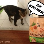 Feeding Your Cat the Healthy Way #goodlifepet #shop