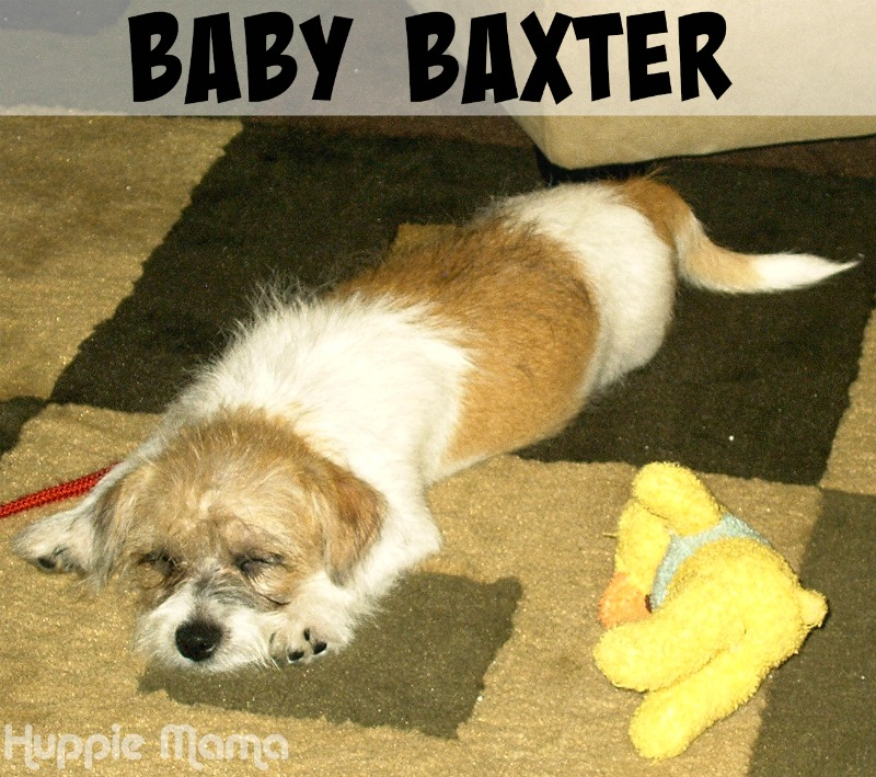 Baby Baxter
