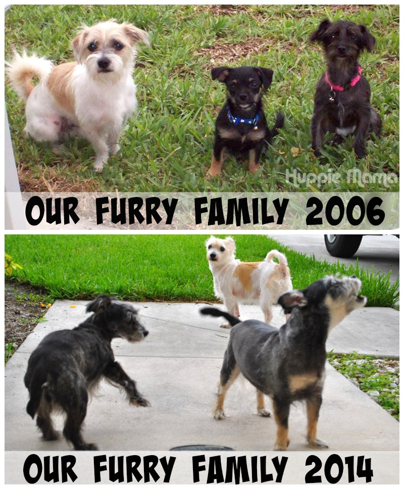 Our Furry Family