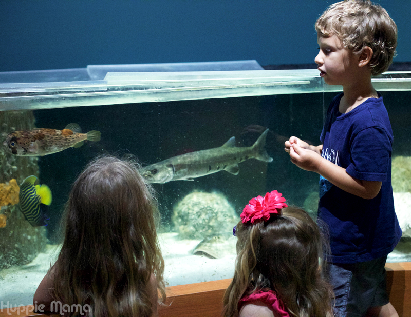 5 Kid Friendly Places To Visit In Florida Our Potluck Family