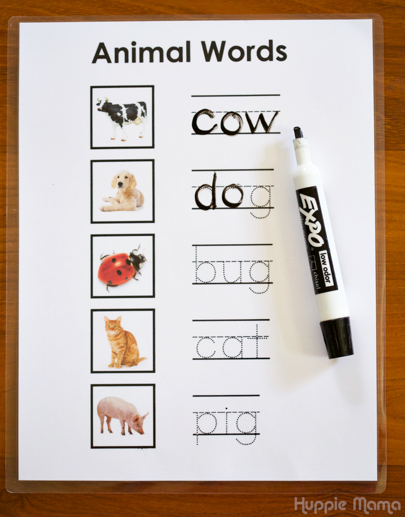 Animal Words task