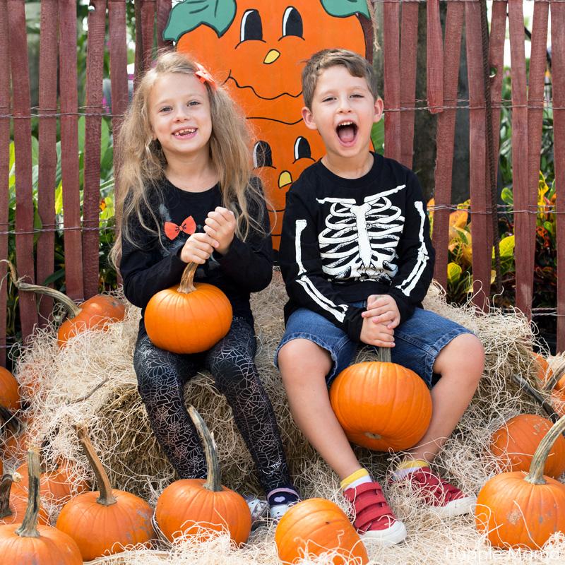 silly-pumpkins