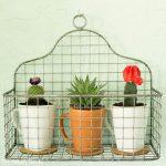 Upcycled Indoor Cactus Garden