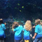Celebrating Birthdays at the Georgia Aquarium