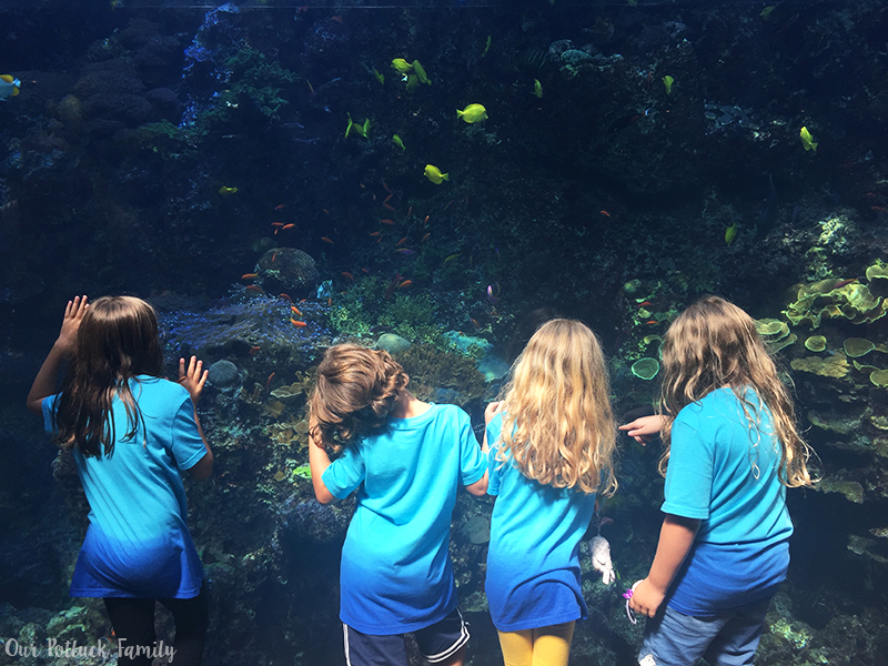 Celebrating Birthdays at the Georgia Aquarium
