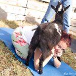 Goat Yoga in Northern Florida