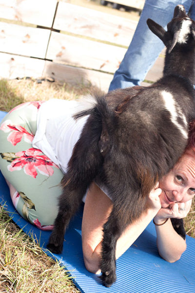 Goat Yoga in Northern Florida