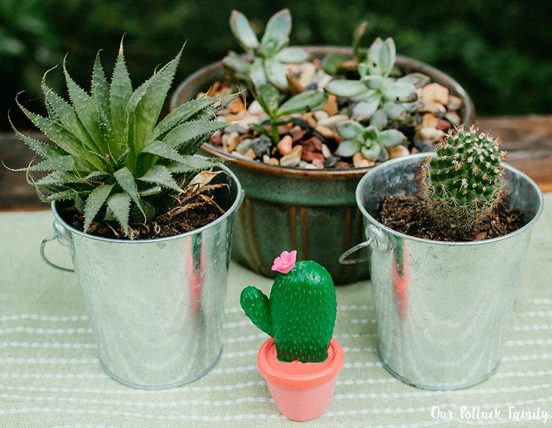 Cactus Party cacti