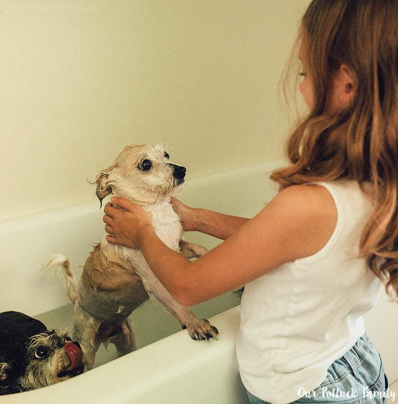 Dog Care Tips bath