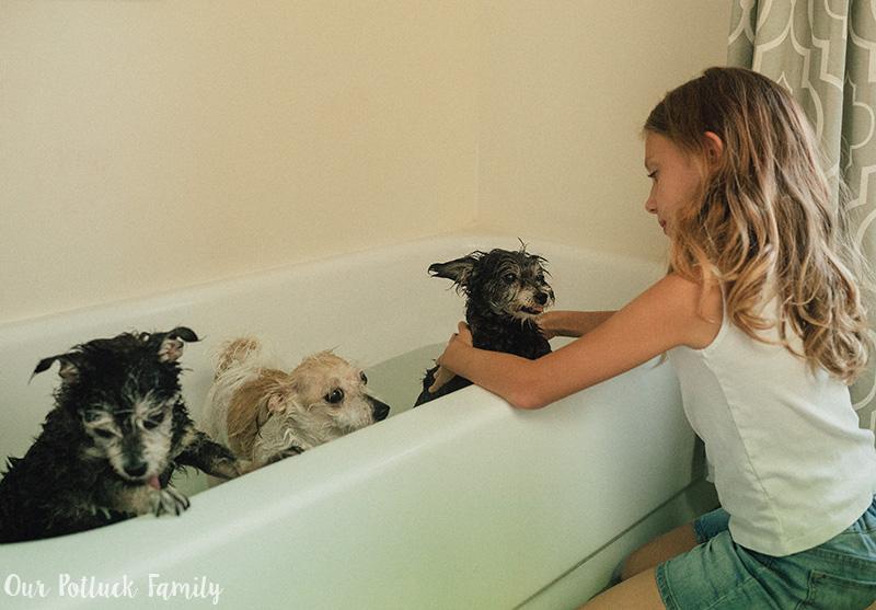 Dog Care Tips bathe