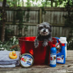 Protect Your Pets this Spring