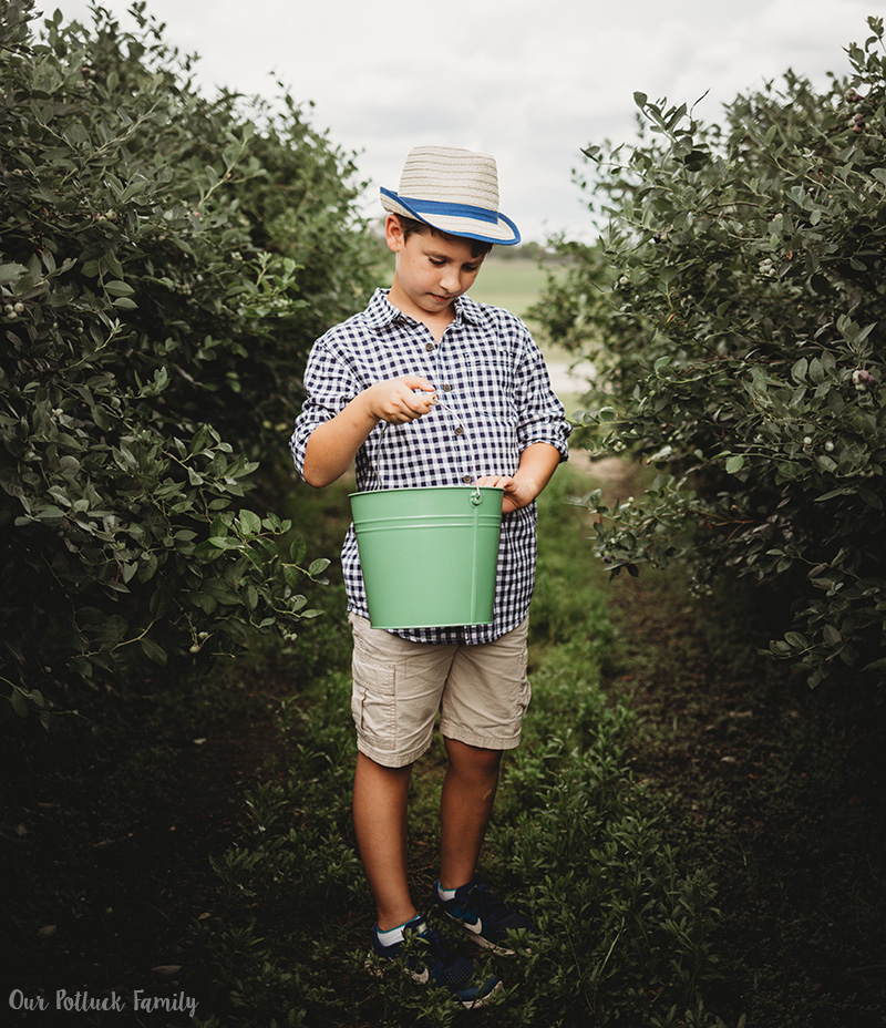 Florida Blueberry Picking boy pail