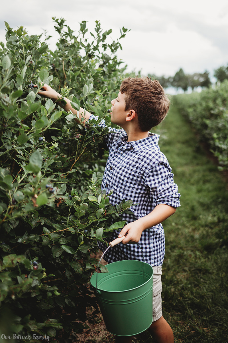 Florida Blueberry Picking boy picks