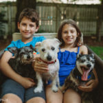 Active Older Dogs: Tips for Care
