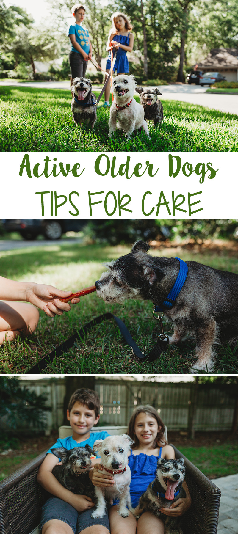Active Older Dogs
